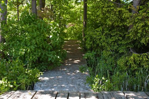 Tempting Path