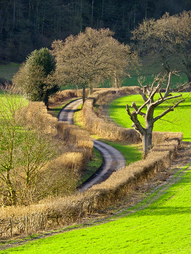 Winding Country Lane by TonyKRO