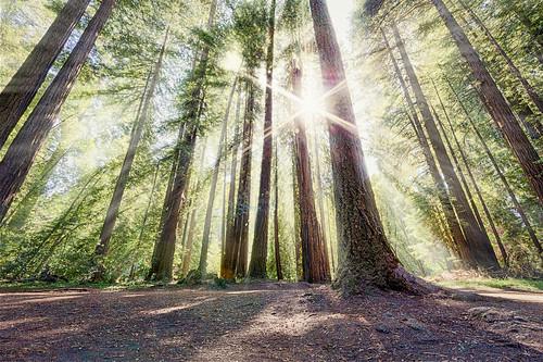 california park santa sun sunlight fog unitedstates state henry cruz felton redwood cowell 500px ifttt