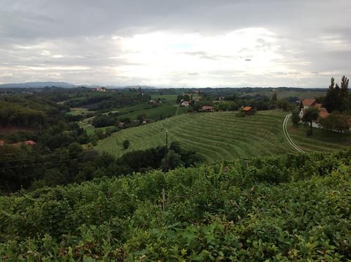 wine trail slovenia jeruzalem viniculture