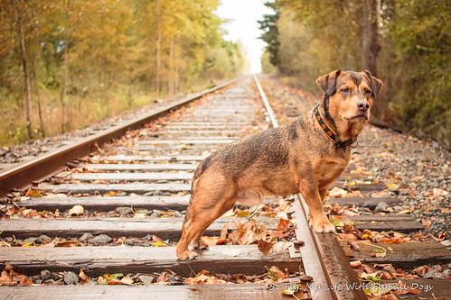Train Tracks-9494