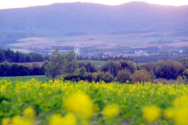キガラシの丘2