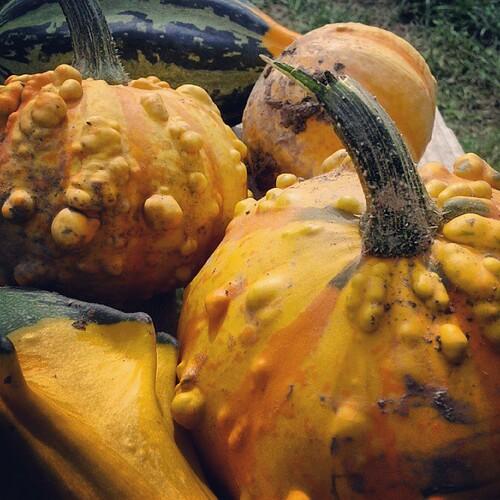 Pumpkin patch success.