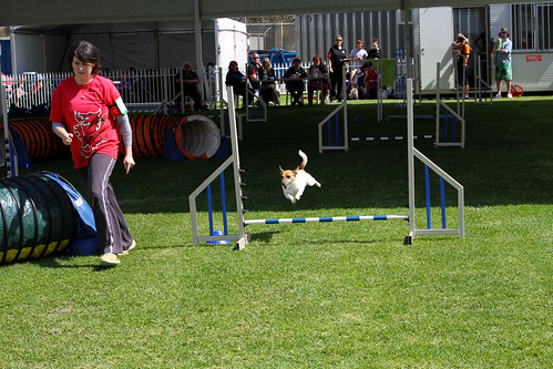 Perth Royal Show 2013 - Dog Jumping