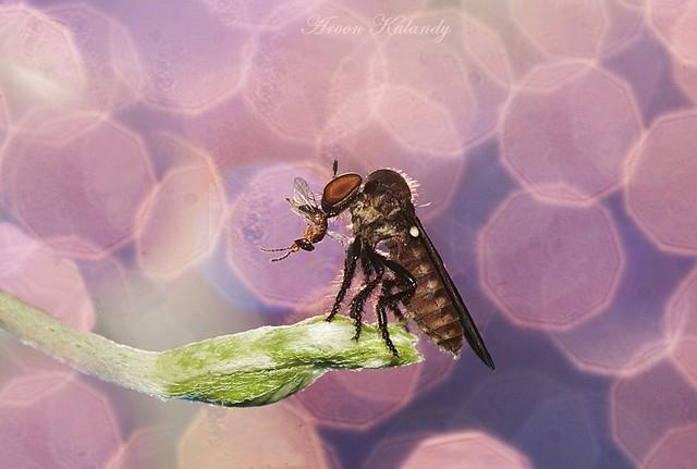 Catching prey........