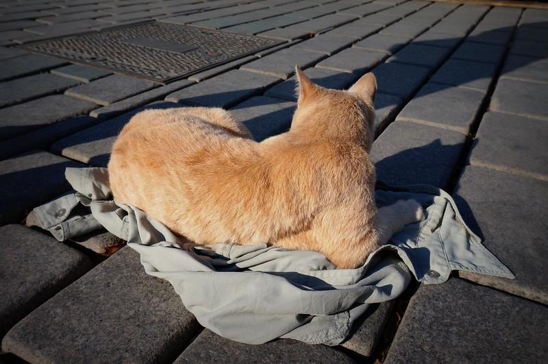 Stray-Cats-Istanbul-(6)
