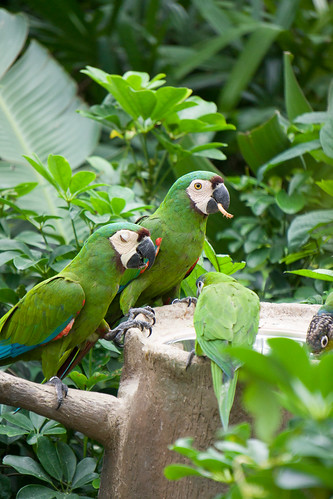 幾隻鸚鵡聚在一起就想起 viewsonic 的 logo 呢
