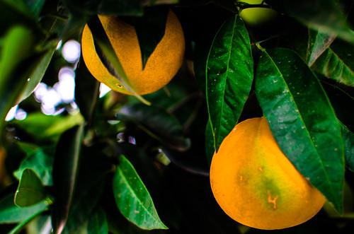 Naranjas 11