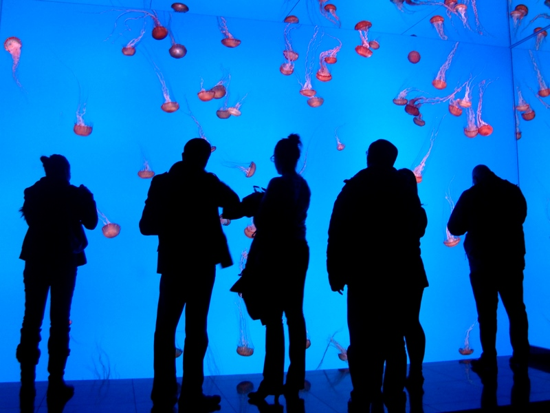 Ripley's Aquarium jellyfish