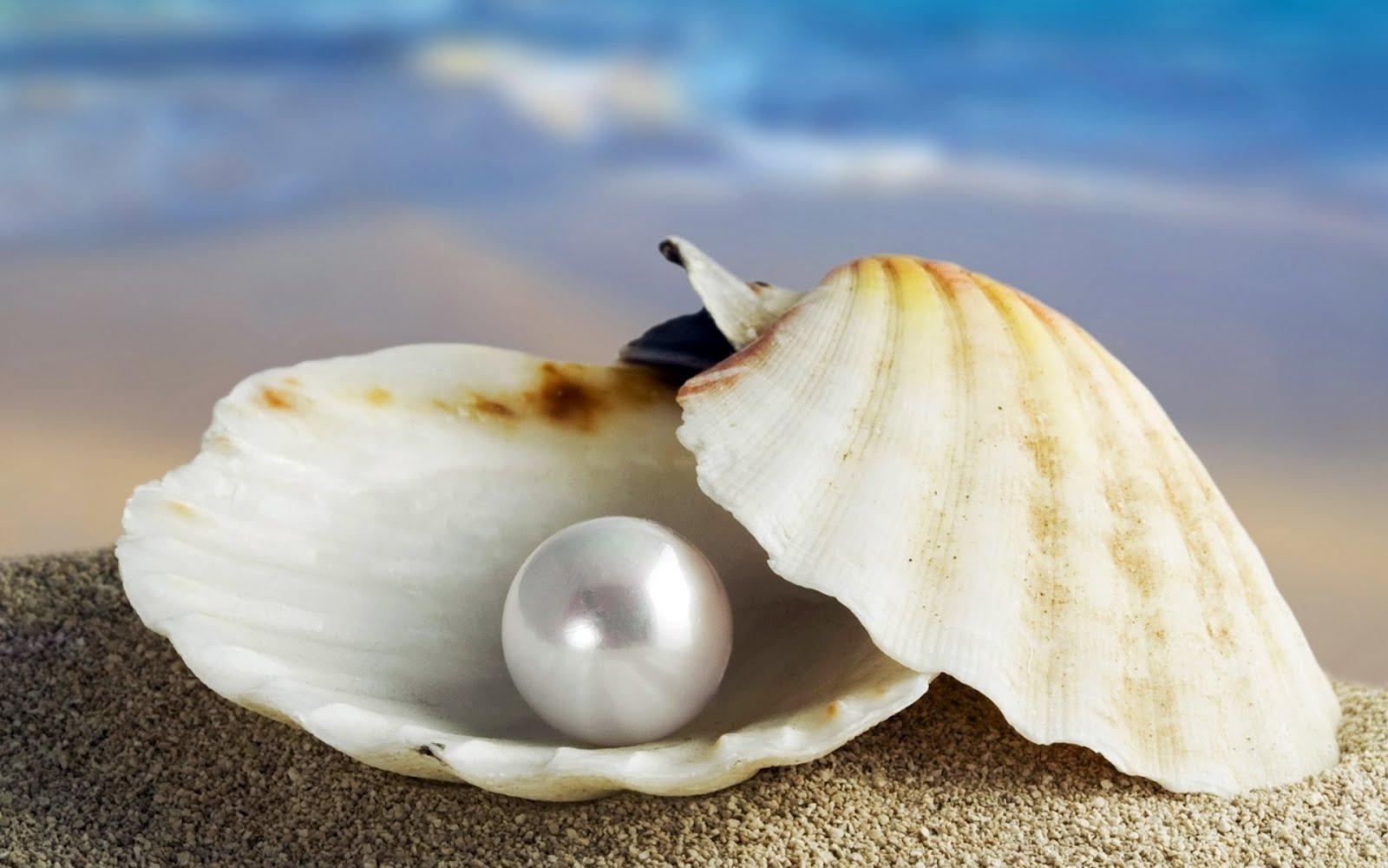 4. Perla, el objeto codiciado del Caribe