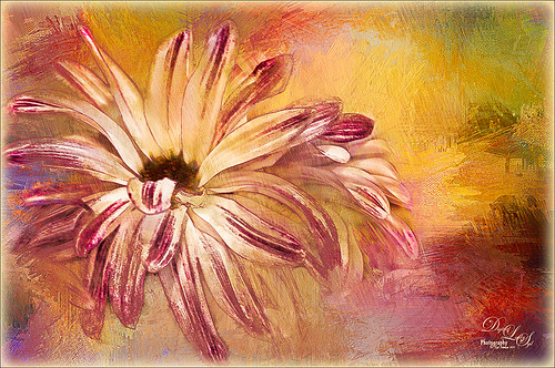Image of Mums with Melissa Gallo textures