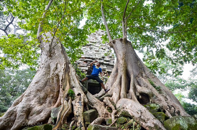This isn't in Pandora nor in The Shire. These immense trees (which have been cut down, actually) loom over Preah Palilay