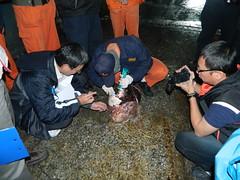 現場利用鯨豚肉試劑檢測(圖片來源:屏東林管處)