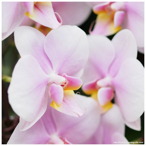 Orchid #08