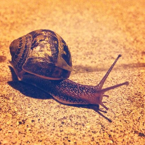 Snail (43/365) by elawgrrl