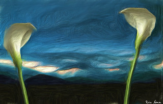 Lilies Before the Storm