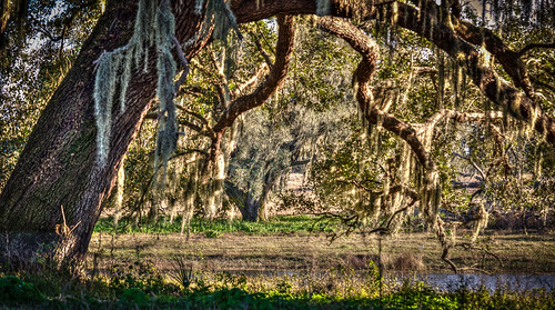 trees florida places hdr highdynamicrange dadecity