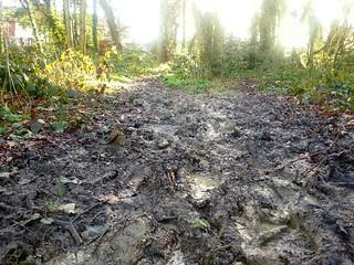 Bexley Park Woods