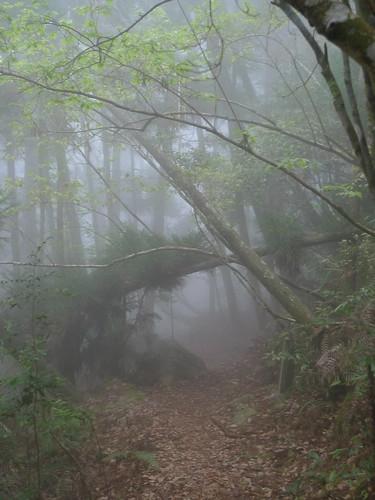 20140322-馬崙山 (314)