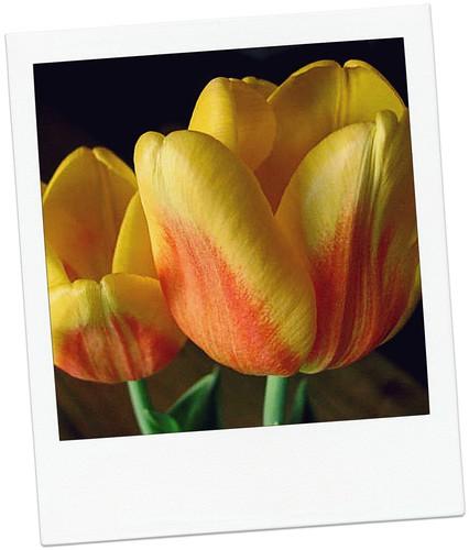 PT-Flowers