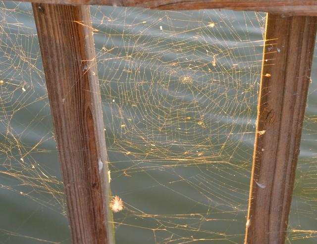 Web in Sun