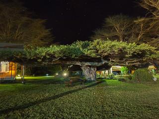 Night under the tree