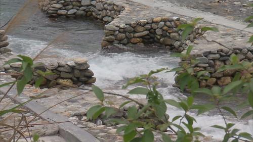 在新城溪進行復育流放