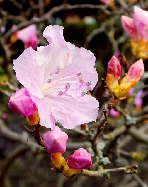 Pretty in pink., Nikon COOLPIX L810