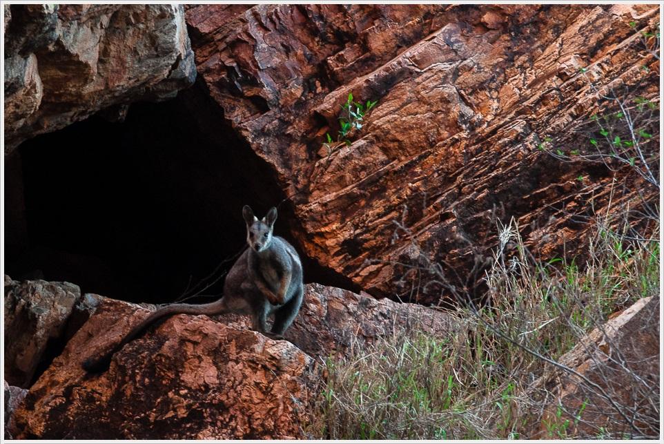2013 05 25_z2strony_Uluru_DSC_0161