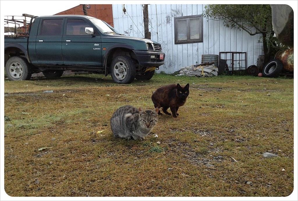 tierra del fuego farm cats