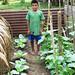 Serjio garden contest winner