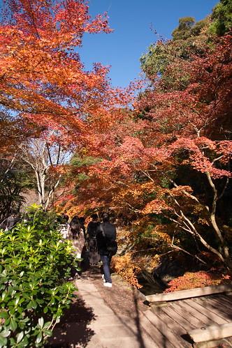 【写真】2012 紅葉 : 哲学の道/2020-10-03/IMGP7373