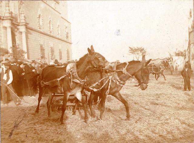 Demostración de un trillo en la Feria de Maquinaria Agrícola en el Hospital Tavera hacia 1910. Fotografía de los Sucesores de Compañy © Cámara Agraria de Toledo, Junta de Comunidades de Castilla-La Mancha