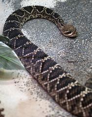 Snake 08-28-2008 4
