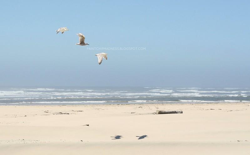 1seagulls