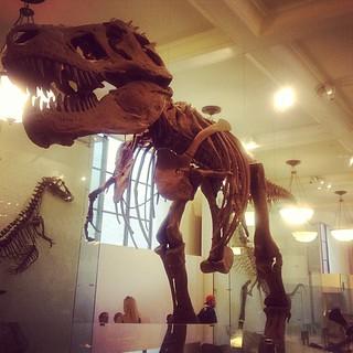 T-Rex!!! #latergram #dinosaurs #happiestnerdalive