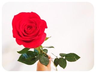 Flor romántica :)