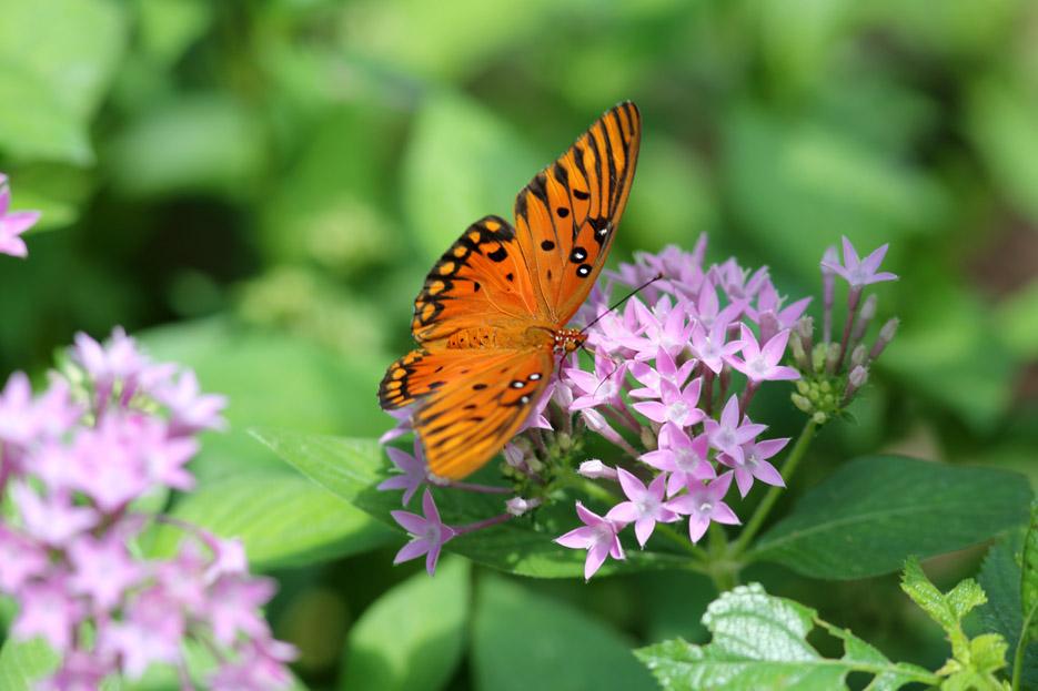 073113_bug_butterfly07b