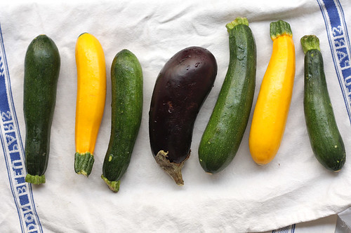 squash and eggplant