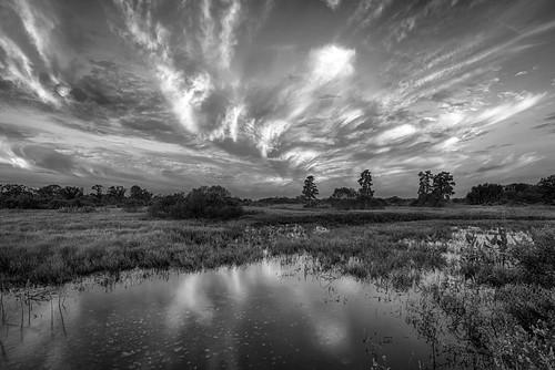 sky blackandwhite bw usa cloud water weather sunrise landscape dawn florida lakeland centralflorida swampmarsh cflwetlands circlebbarreserve