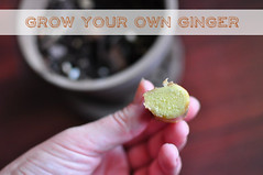 1 grow your own ginger