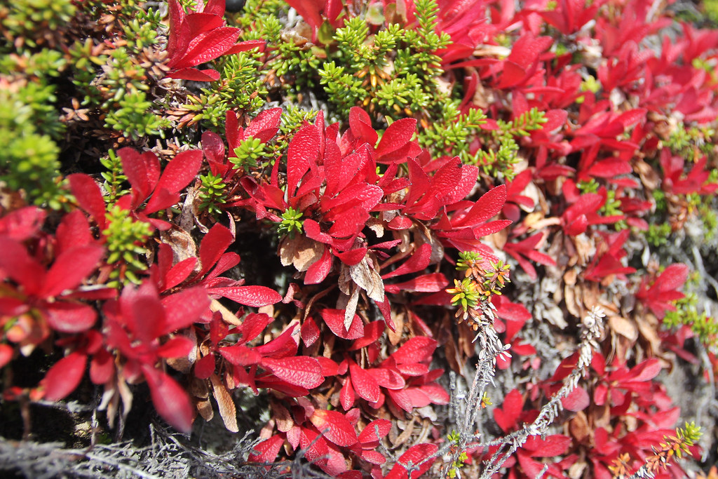 Autumnal Norway