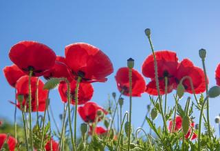 Les Fleurs et le Soleil