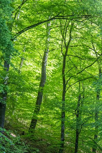wood green forest wald damncool
