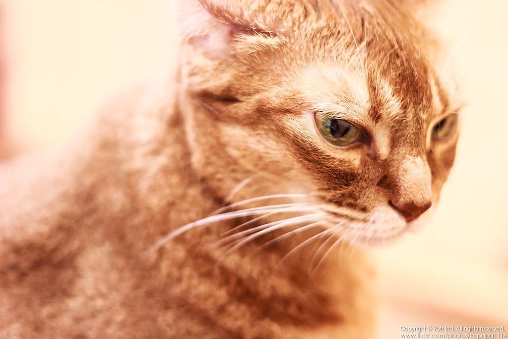 元氣貓主題餐廳 IMG_6031