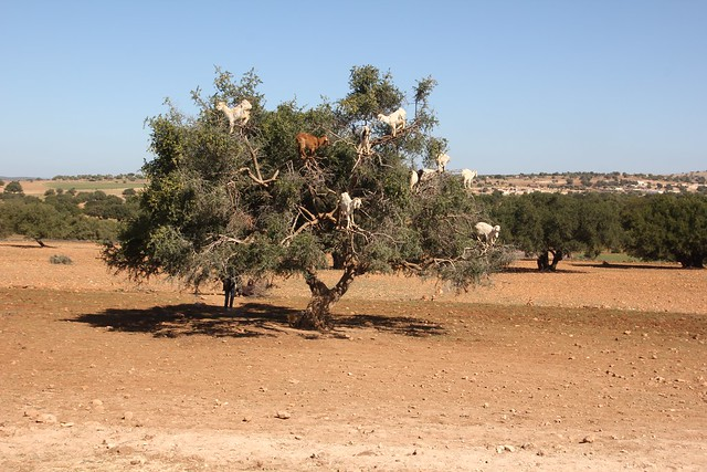 241 - Camino a Essaouira