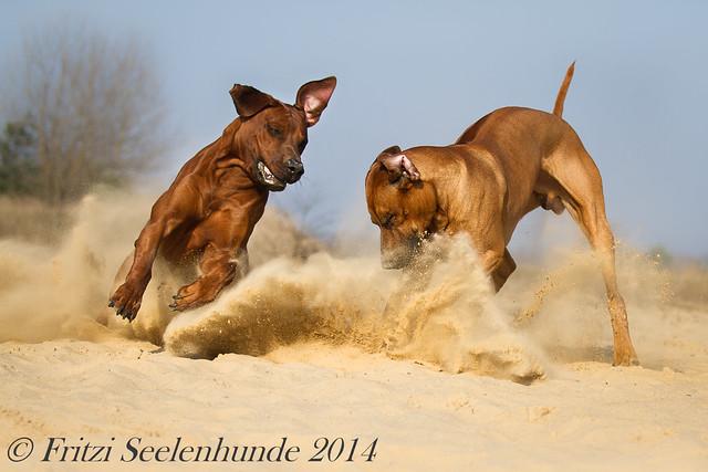 Jomo & Wamboo - im Rausch von Sonne und Sand :o)