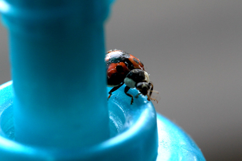 ladybug on handsoap4