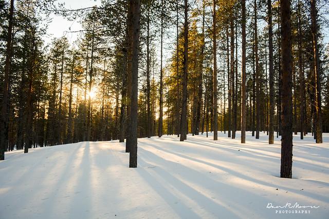 An Arctic Adventure in Swedish Lapland - Sun Through the Trees in Swedish Lapland