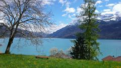 Jezioro Brienersee niedaleko Interlaken - juz wiosna w pełni